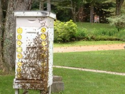 honeybee hive swarm july 2013