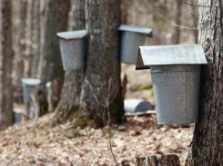 Maple-Sap-Buckets-Vermont-bed-and-breakfast