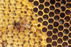 Organic-Beekeeping-Workshop-Ross-Conrad
