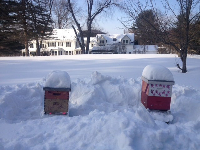 snow and beehives