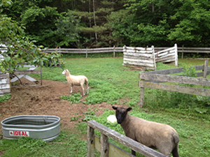 Animals in the foreground of farm and trees in the background.