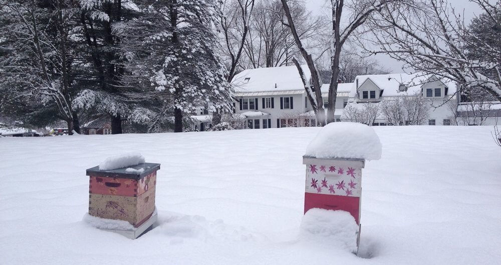 two brightly decorated beehives buried under snow nestled in a snow covered yard with the tree framed, large white inn with black shutters in background