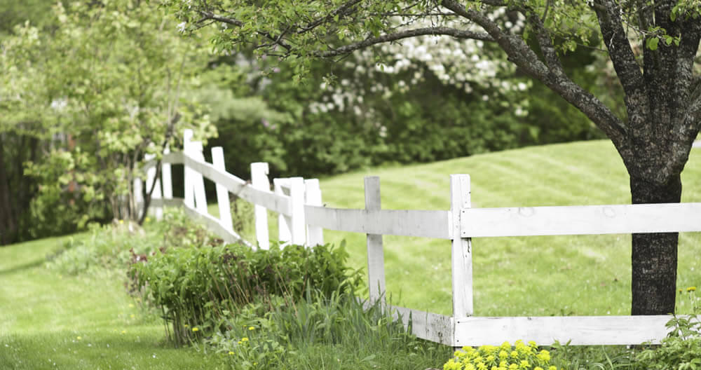 rustic white painted rail fence lined with green plants with one bunch of bright yellow flowers all under a small apple tree in a tree lined lawn of green freshly mowed grass