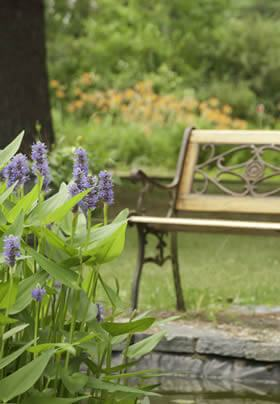 purple flowers on green leaf plant in a small garden pond with wooden park bench, and in the background is a backdrop of greenery